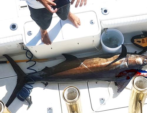 Спортен риболов в Куба