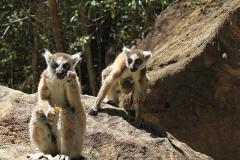 Исало Парк Мадагаскар