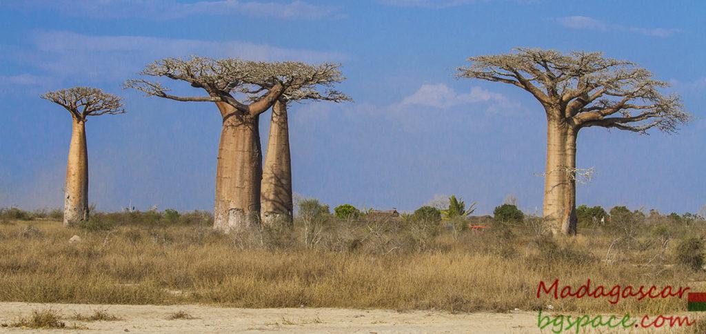 Преди да заминем за Мадагаскар