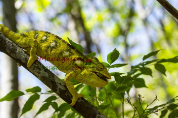 Видео Мадагаскар