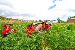 Местни жители на Титикака Перу