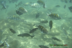 Воден парк Мексико Ривиера Мая