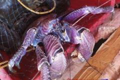 Манила рибен пазар